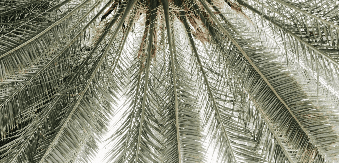 LA Creative Studio Contact Form Palmtree leaves green